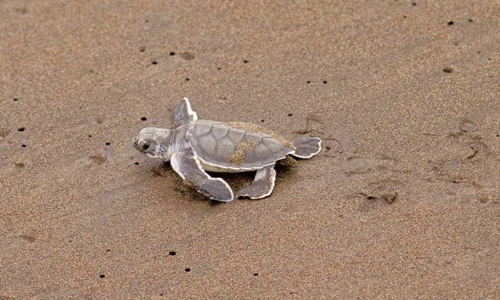 Turtles-of-HP-